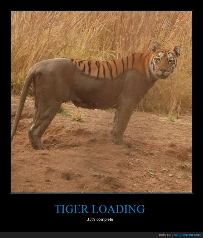 barro,loading,tigre
