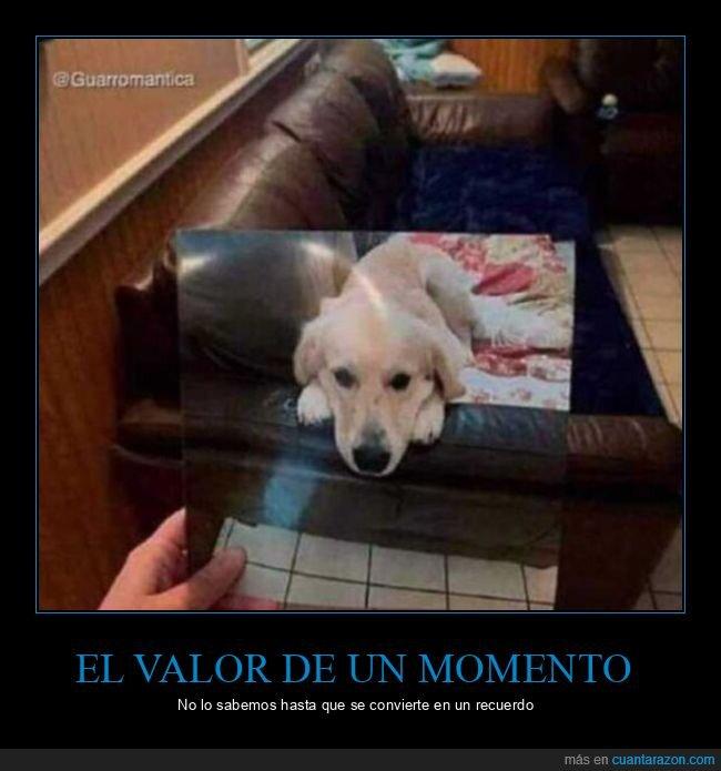 momento,perro,recuerdo,valor