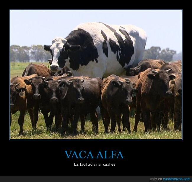 gigante,vaca,wtf