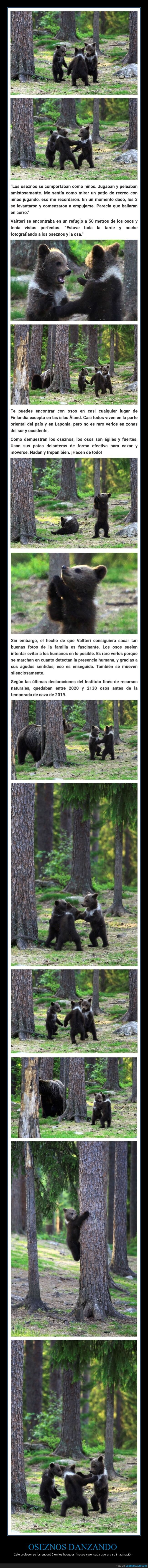 danzando,oseznos,osos,wtf