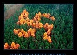 Enlace a El bosque nazi