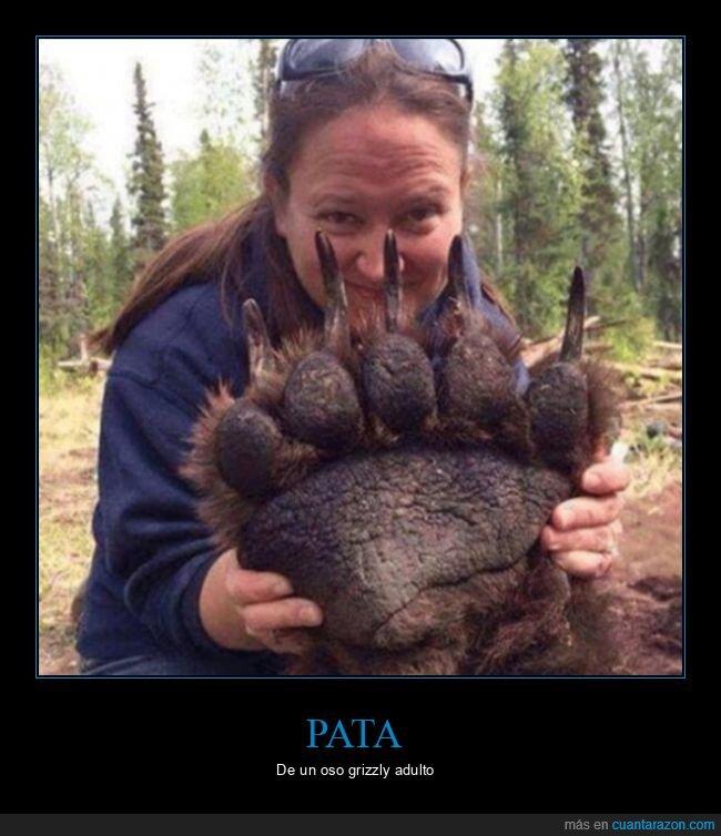 oso,pata,tamaño