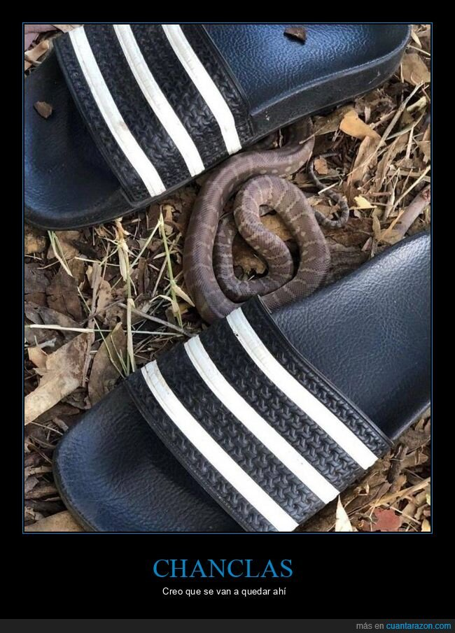 chanclas,serpiente,wtf