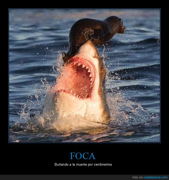 casi,foca,tiburón