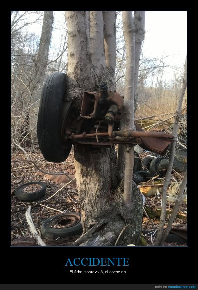 accidente,árbol,coche