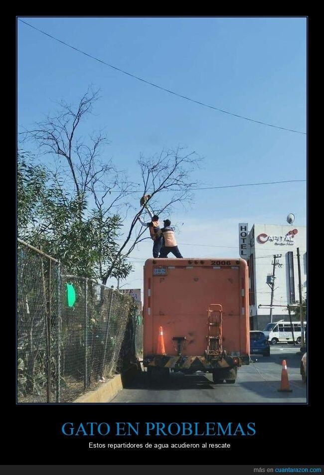 árbol,gato,repartidores,rescate