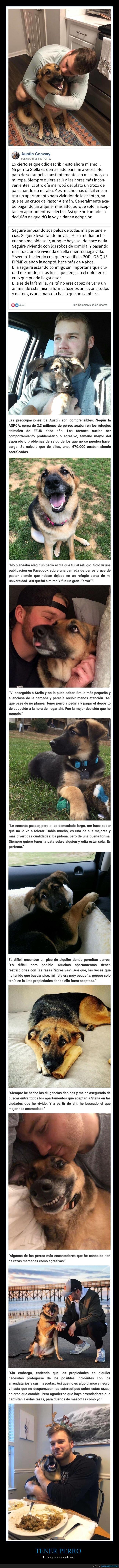 perros,responsabilidad