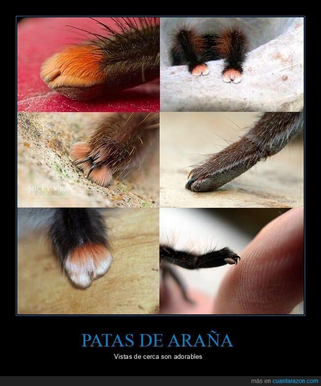 adorables,arañas,patas