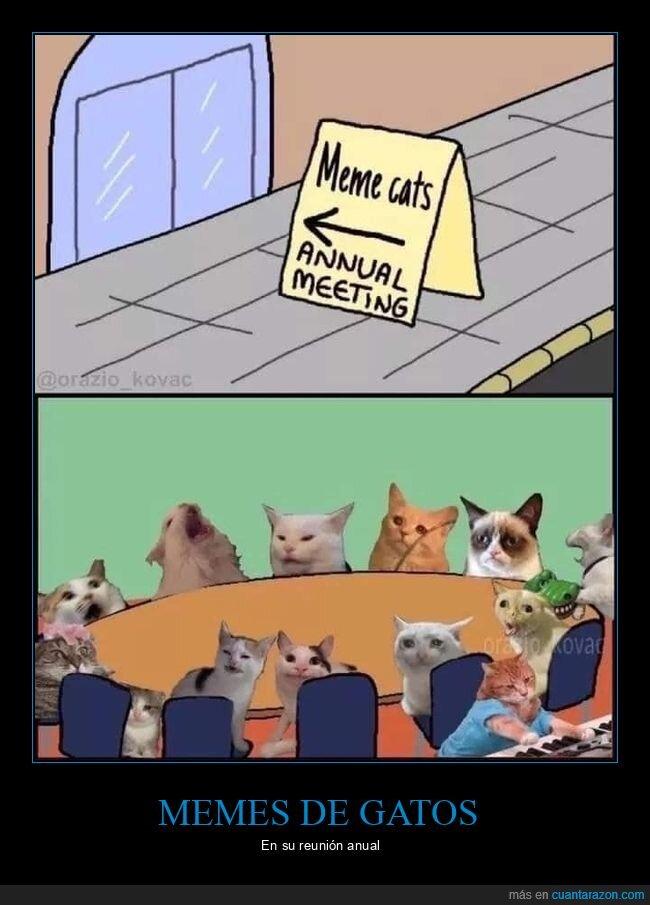 gatos,memes,reunión