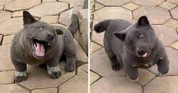 Enlace a La gente dice que este cachorro parece un híbrido de gato y perro, y sus expresiones son divertidísimas