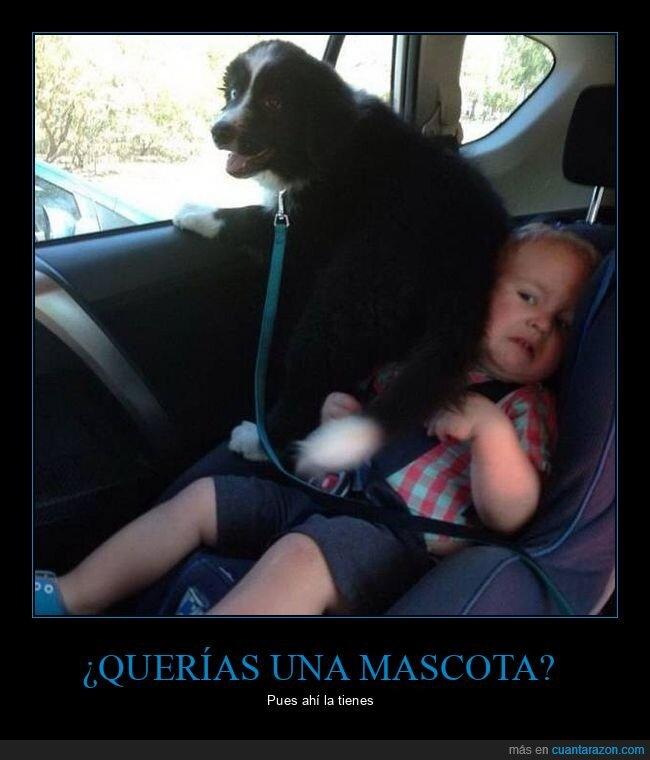 coche,niño,perro