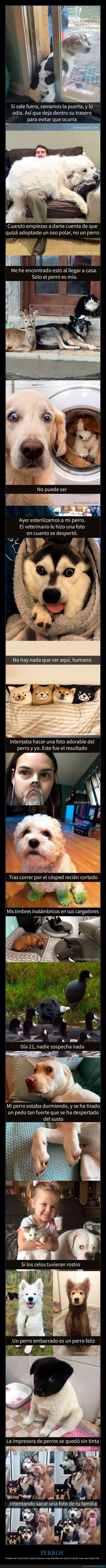 perros,snapchats
