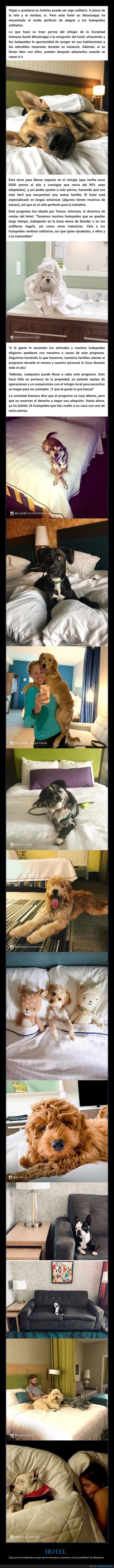 adoptar,hotel,perros