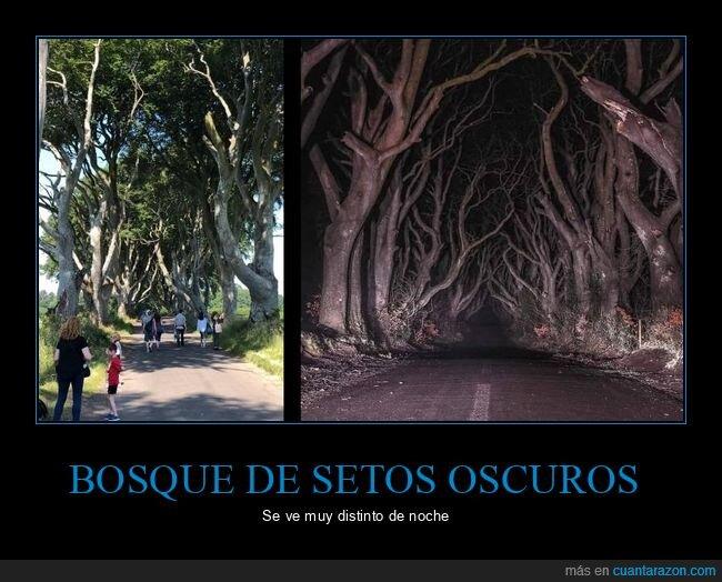 bosque,día,noche,setos oscuros