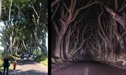 Enlace a Bosque tenebroso