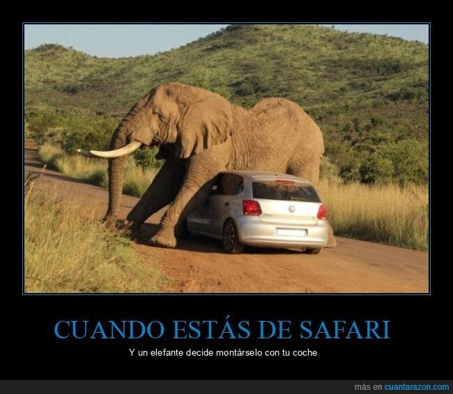 coche,elefante,safari,wtf