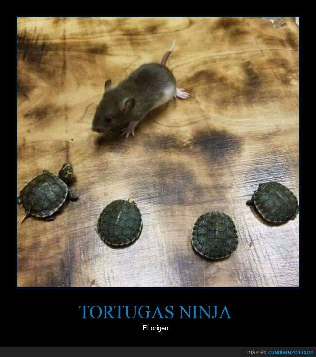 rata,tortugas,tortugas ninja,wtf