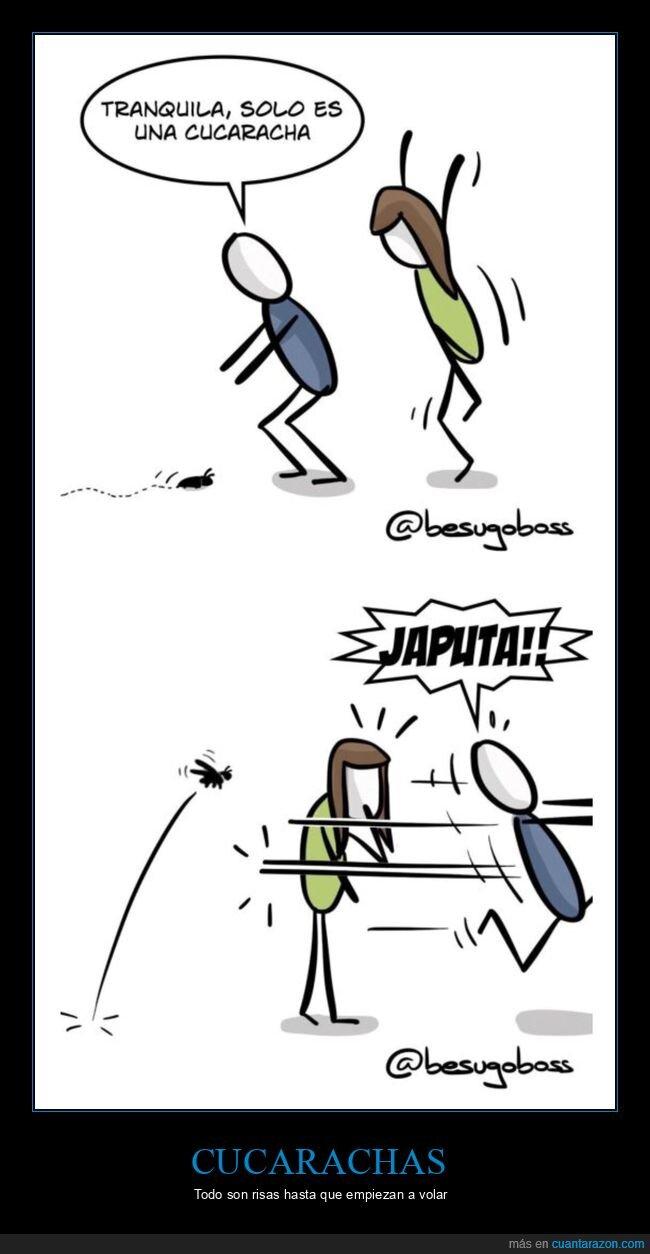 cucaracha,volando