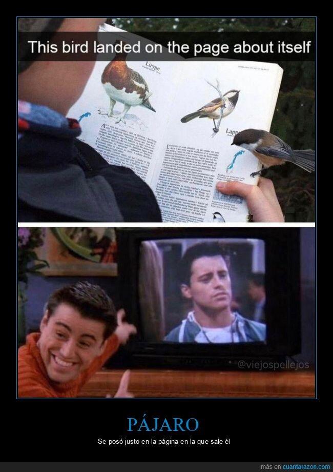 friends,joey,libro,página,pájaro,wtf