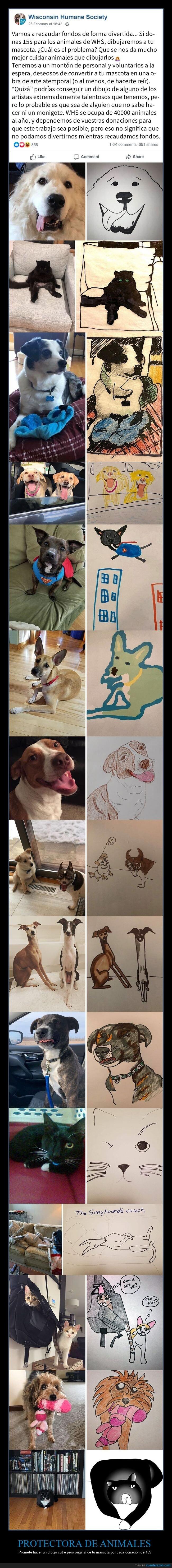 animales,dibujos,donaciones,protectora