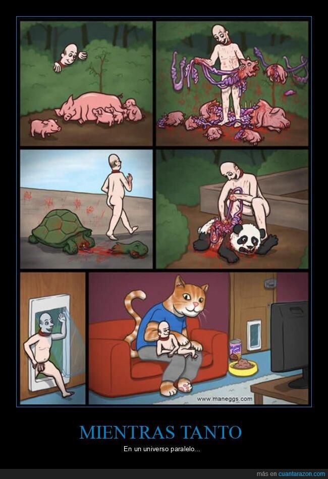 gato,humano,universo paralelo
