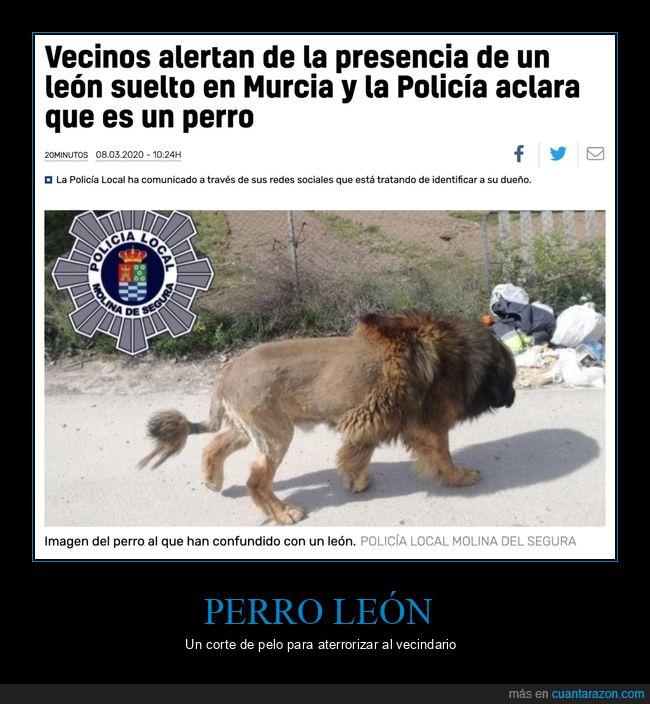 león,murcia,perro