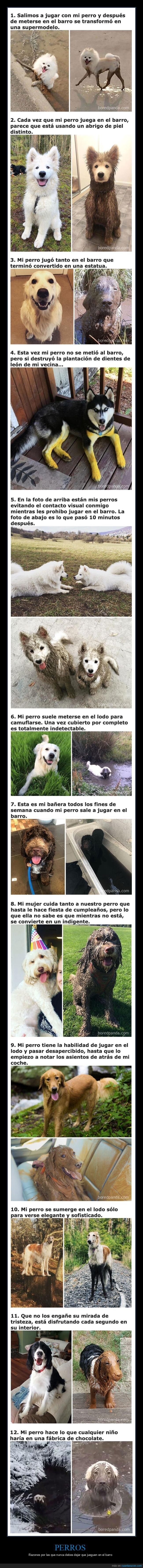 barro,jugar,perros