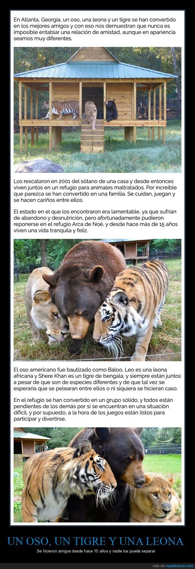 amigos,leona,oso,tigre