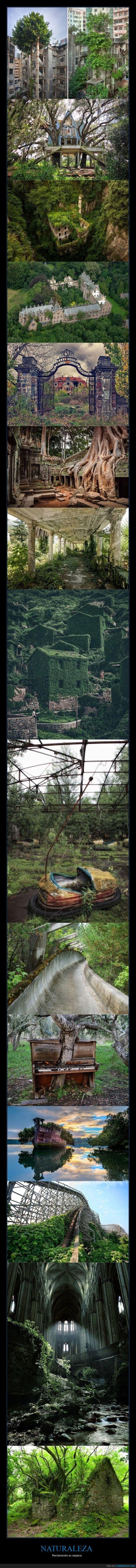 naturaleza,reclamando,vegetación