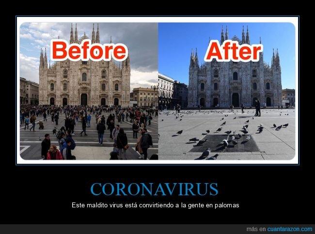 coronavirus,paloma