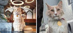 Enlace a Un grupo de Facebook de 30.000 personas en Nueva Zelanda sirve para hacer fotos de un gato de la zona cada vez que se lo encuentran
