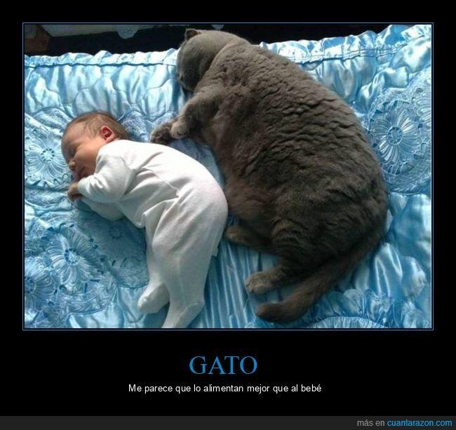 bebé,durmiendo,gato