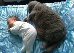 Enlace a Un gato bien nutrido