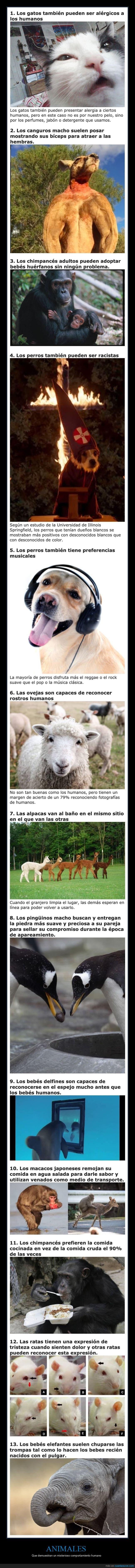 animales,comportamiento,humano