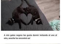 Enlace a Reconfortantes fotos de gatos negros para demostrar que no tienen nada que ver con la mala suerte