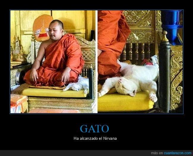 durmiendo,gato,meditando,monje,postura,wtf