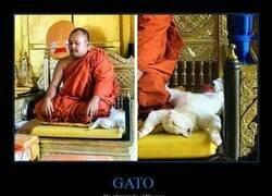 Enlace a Meditación profunda