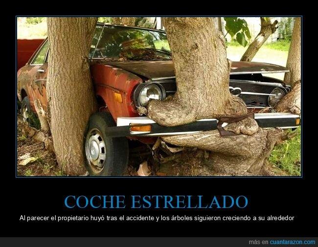árboles,coche,creciendo,estrellado