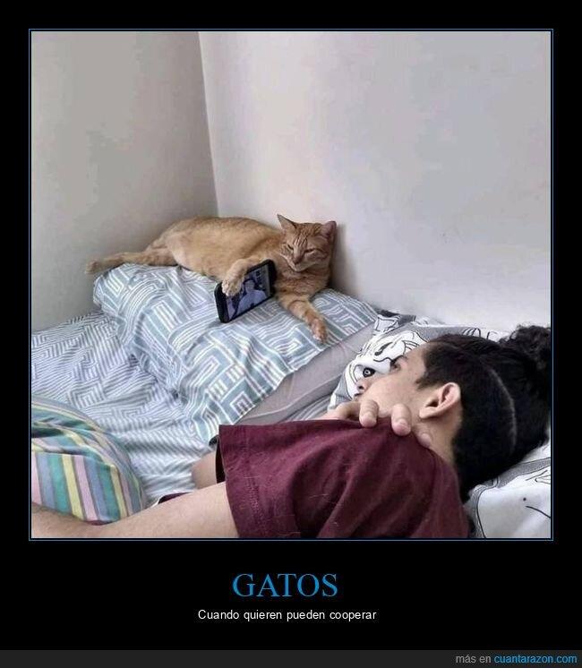 gato,móvil,sujetando