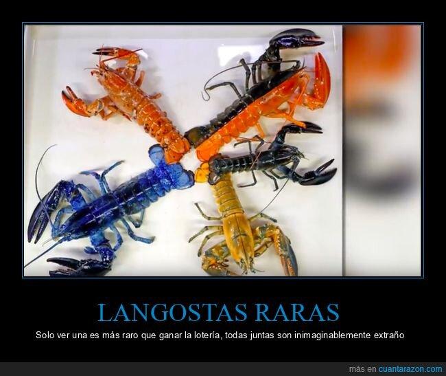 curiosidades,langostas,mutaciones,raras
