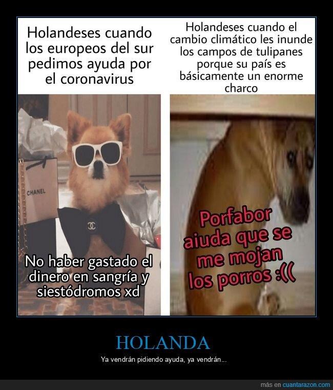 coronavirus,holanda