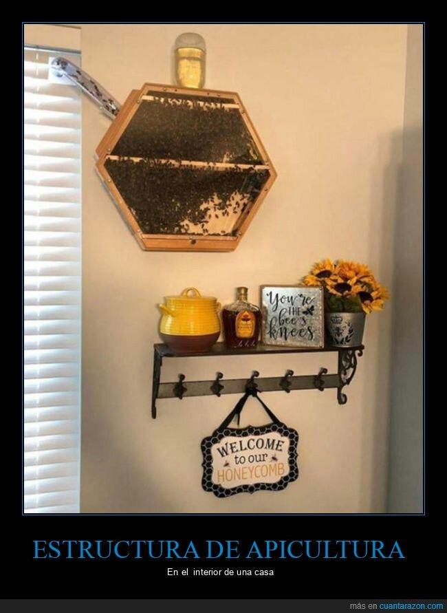 abejas,apicultura,casa,interior