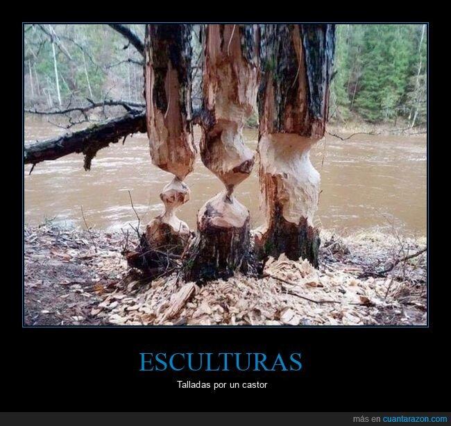 árboles,castores,tallados