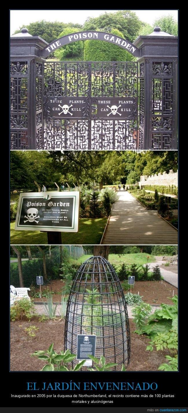 alucinógenas,jardín envenenado,mortales,plantas