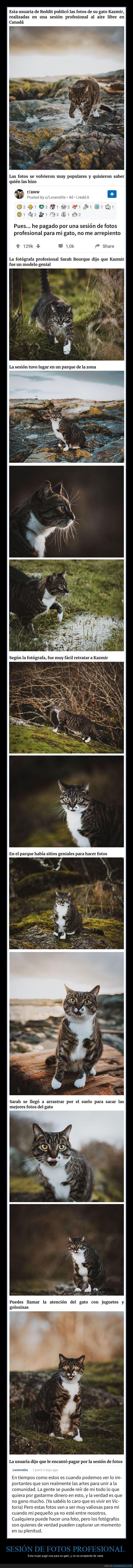gato,sesión de fotos