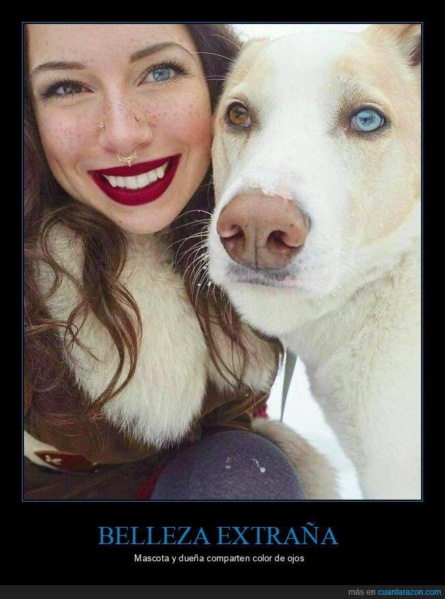 color,ojos,perro