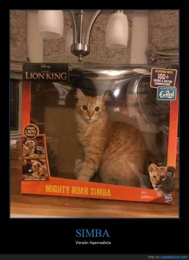 caja,el rey león,gato