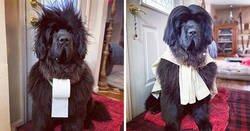 Enlace a Esta dueña peina a su perro cada día desde que empezó la cuarentena, y la gente está deseando ver los peinados cada día