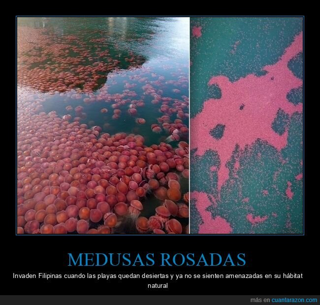 coronavirus,cuarentena,filipinas,medusas,playas