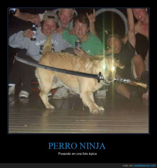 espada,ninja,perro